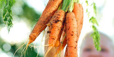 Foto: Karotten