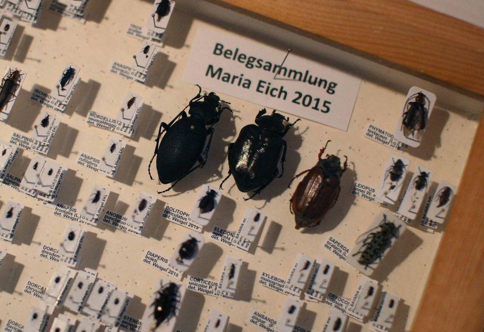 Foto: Käfersammlung