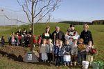 Foto: ein Berg-Ahorn beim katholischen Kindergarten in Aying-Großhelfendorf