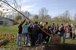 Foto: Eine Plantane im Pausenhof der Waldorffschule in Ismaning