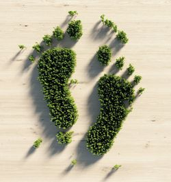 Foto: Symbolbild Wald