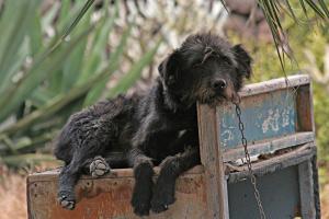 Foto: Hund