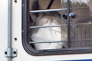 Foto: Transport eines Pferdes