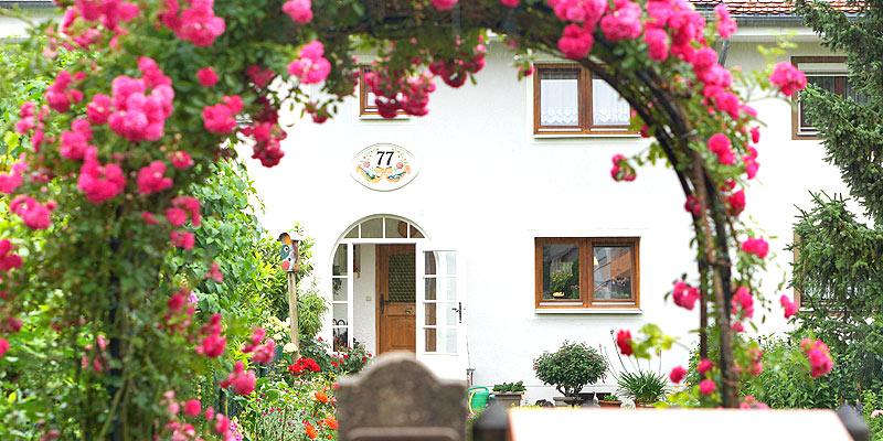 Blick auf weißes Haus mit der Hauseingangsnummer 77 durch einen mit pinken Blumen umwachsenen Garteneingangsbogen