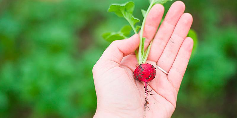 Die GemüseAckerdemie - das Bildungsprogramm für Kindertagesstätten und Schulen