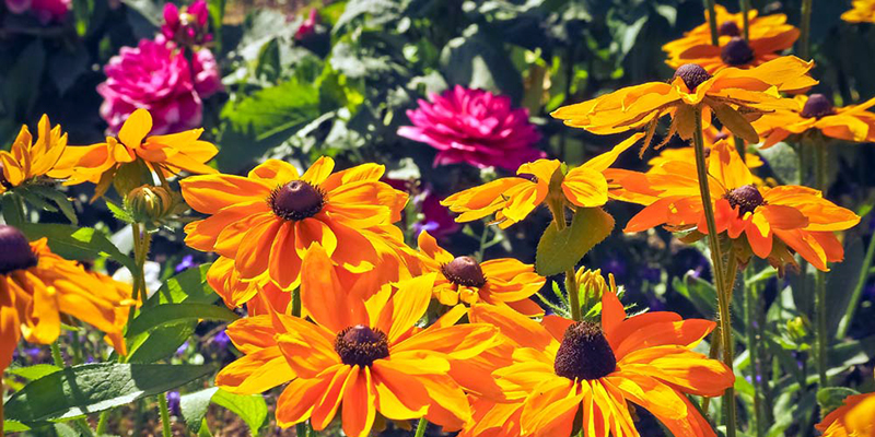 Foto: Blumen