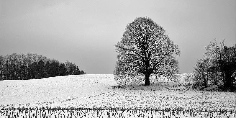 Foto: Baum mit Schnee